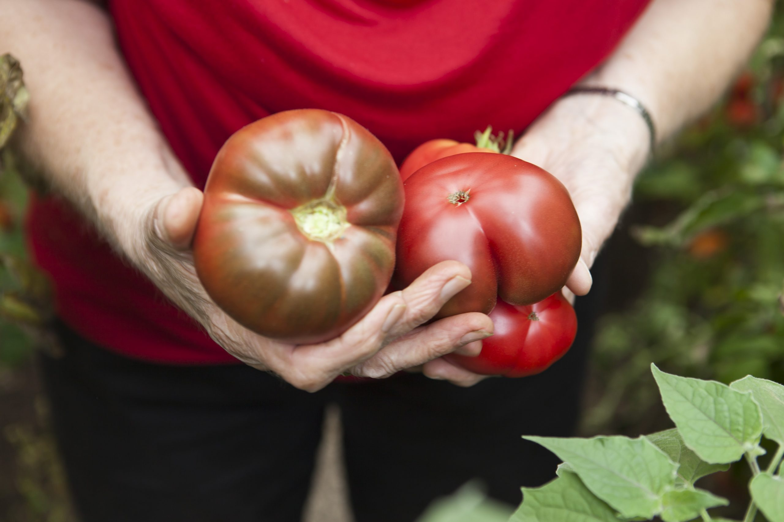 """Robert Fleischanderl: """"Tomaten"""", 2020, 50x70 cm, Plakat auf Wand affichiert, (c) Robert Fleischanderl 2020/2021"""
